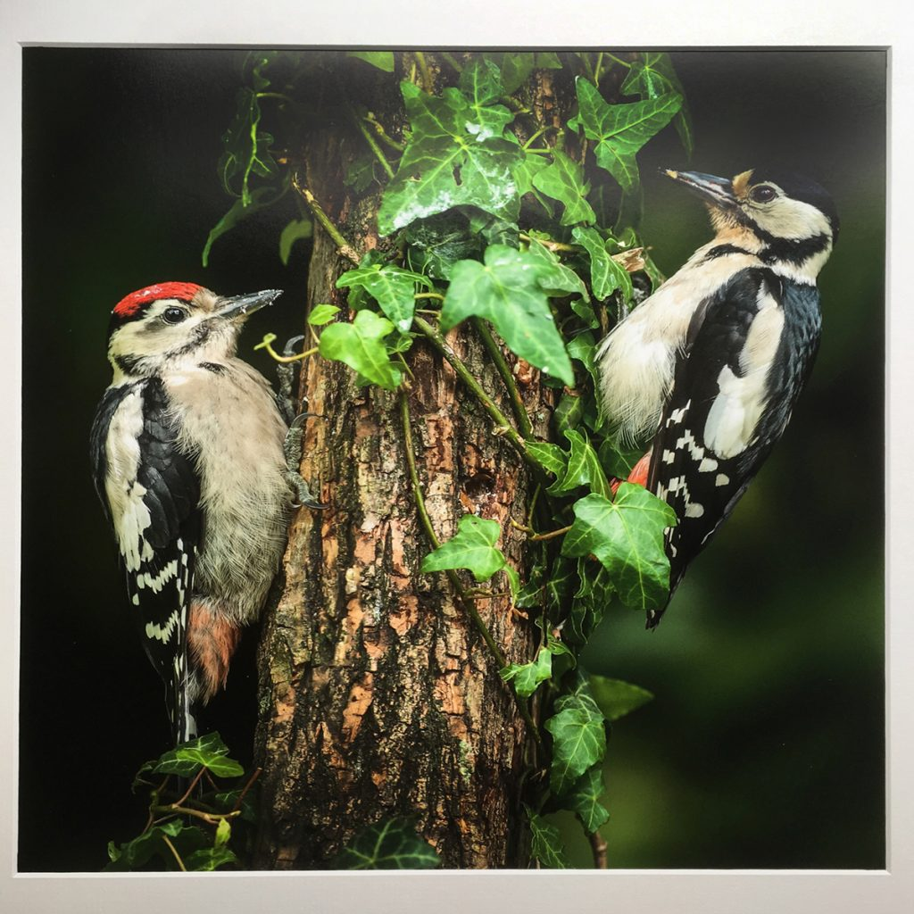 Two woodpeckers by Bob Connelly