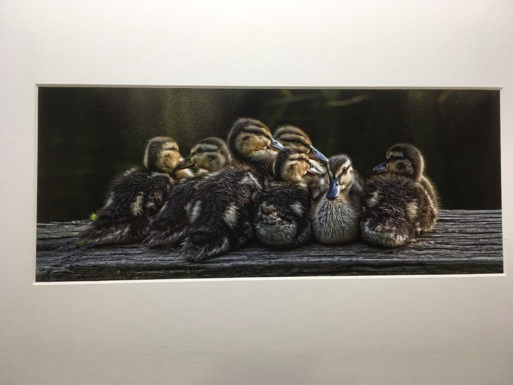 In a Huddle by Adam Cowley