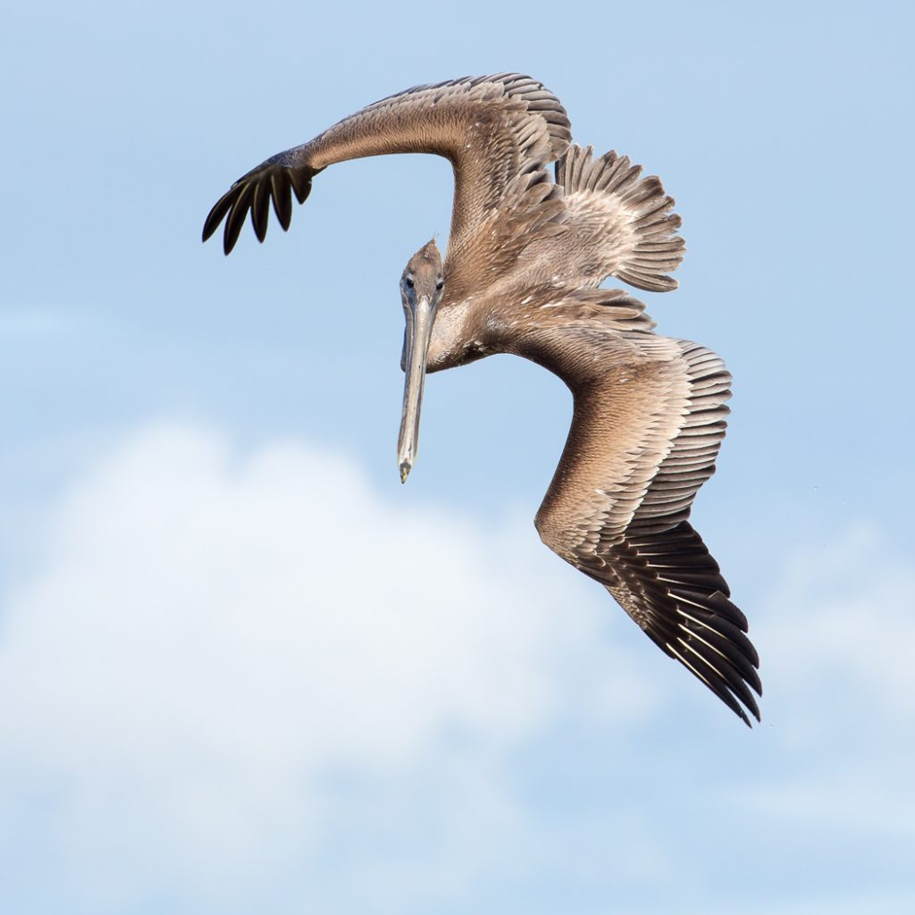 Pelican, I'm looking at you